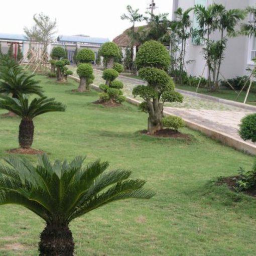 Sân Vườn - Tiểu Cảnh - Non Bộlà phần quan trọng góp phần tạo nên vẻ đẹpvà phong thủy cho ngôi nhà của bạn. Vì vậy